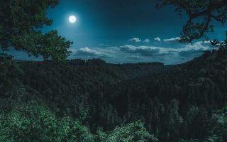 Цитаты про ночь