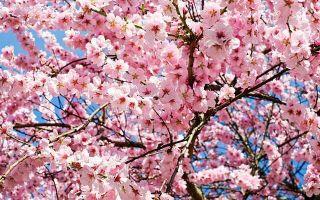 Веселые Статусы про Весну