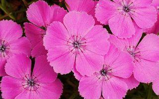 Цитаты про цветы со смыслом