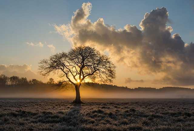 Дерево на восходе солнца