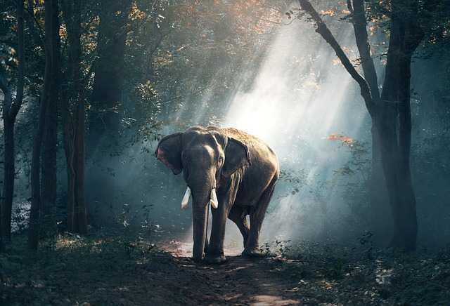 Слон в джунглях