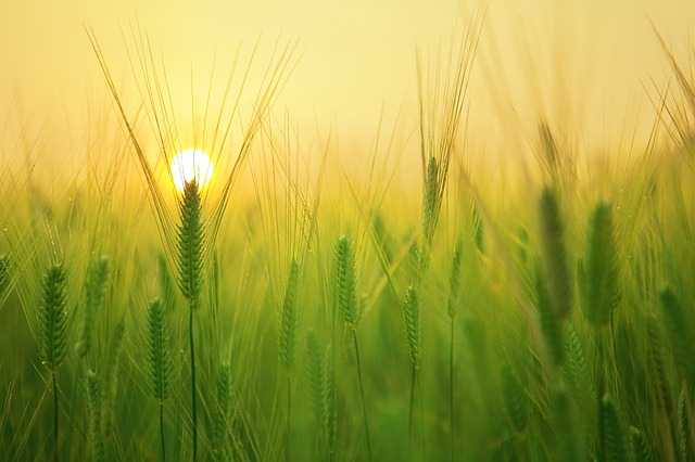 Утро в поле